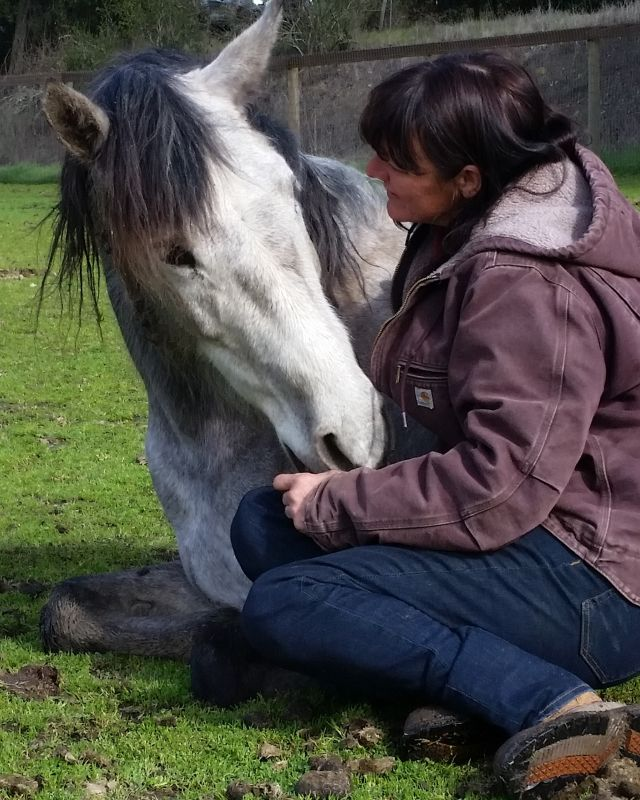 Horse-Sales-Lease|All-The-Kings-Horses-Ranch|ATKH|Sonoma|Napa